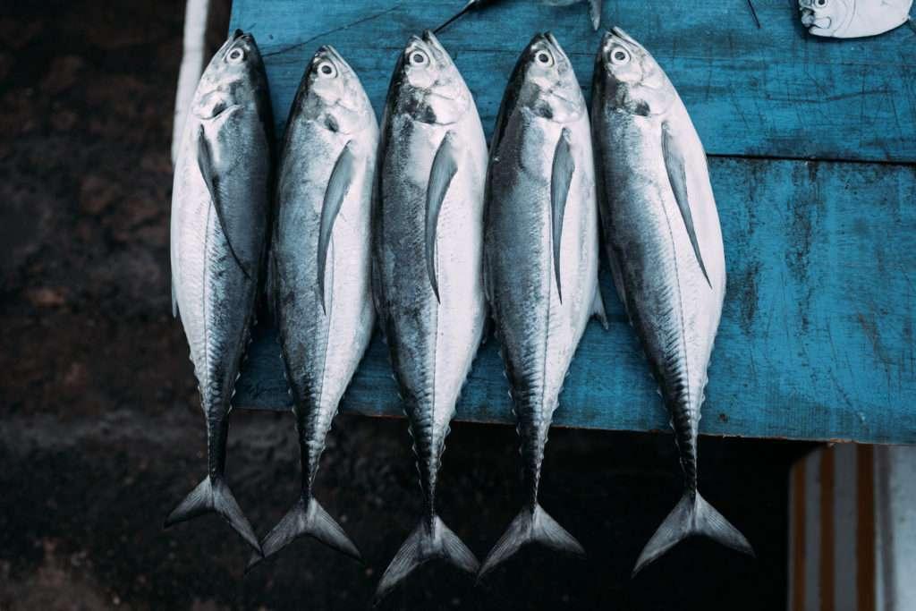 przeławianie ryb