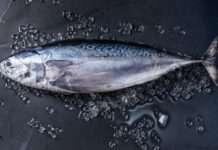 Tuńczyk zagrożony wyginięciem