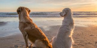 o czym pamiętać latem mając psa