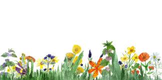 grafika z polnymi kwiatami i ziołami