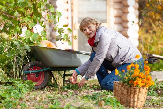 Kobieta z taczką pracująca w ogrodzie