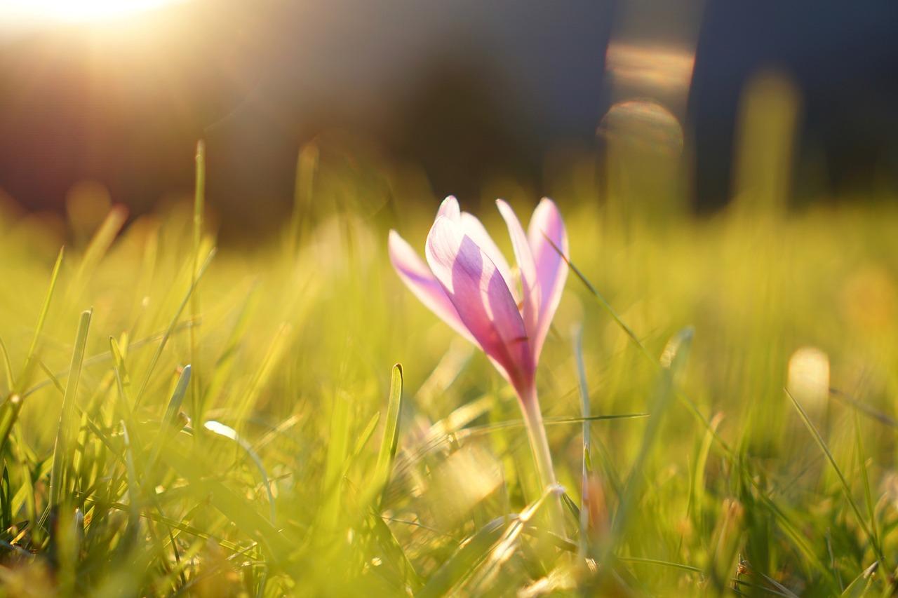 Kwiat kwitnący w ogrodzie