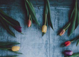 wiosna aranżacja z tulipanów