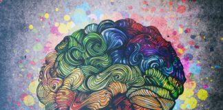 mózg kolorowa ilustracja schemat