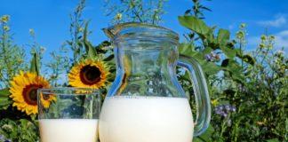 mleko w dzbanku szklance na tle słoneczników