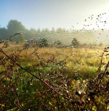 Pajęczyna z kroplami rosy na polu
