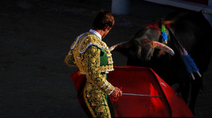 mężczyzna i byk podczas korridy