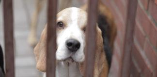 opuszczony pies za kratami