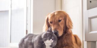 kot i pies na legowisku w domu