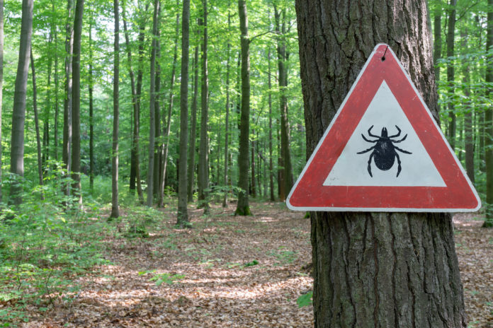 znak na drzewie ostrzegający przed kleszczami