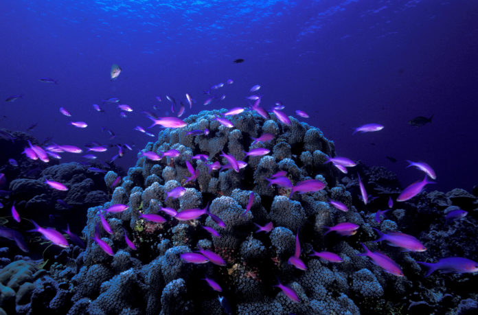Kosrae Mikronezja