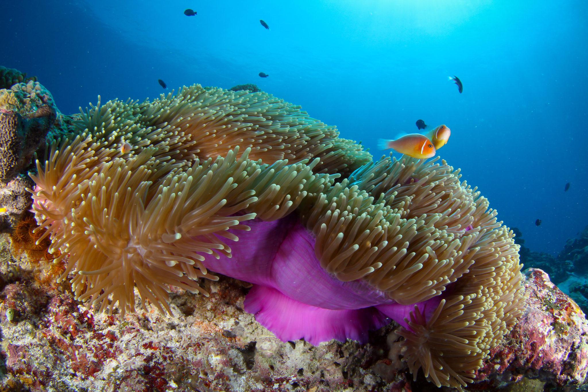 rafa koralowa na Palau