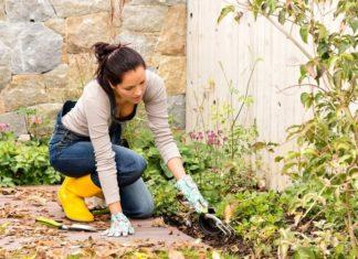 4 wskazówki ogrodnicze na późną jesień