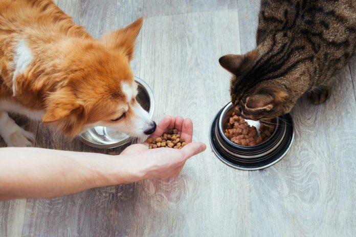 karma sucha dla psa i kota